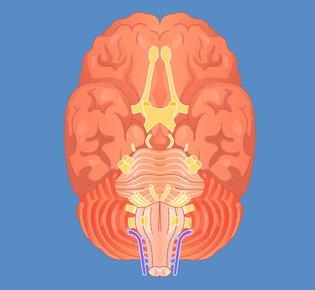 Exercício Medula & Nervos Cranianos