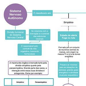 Mapa Mental Sistema Nervoso Autônomo