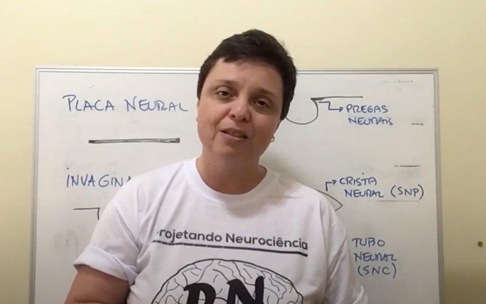 Neuroanatomia Descomplicada - Divisão embrionária