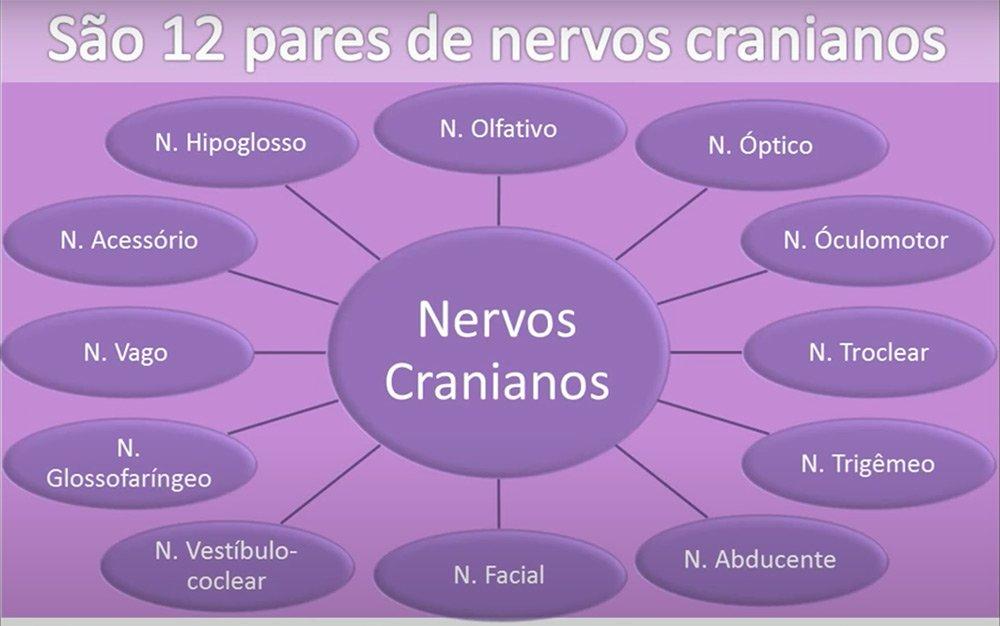 Paródia dos Nervos Cranianos