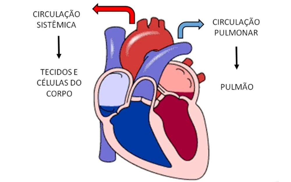 Vídeo Coração e Ciclo Cardíaco utilizando Arduíno