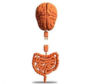 Cérebro no intestino?